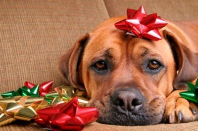 sad-holiday-dog